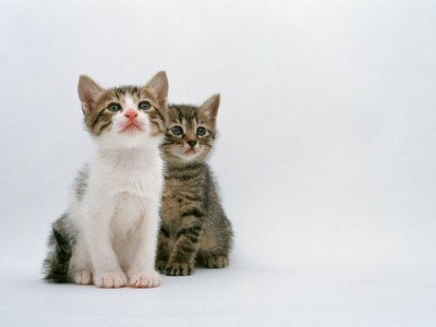 ネコちゃんは最愛の友達だから...